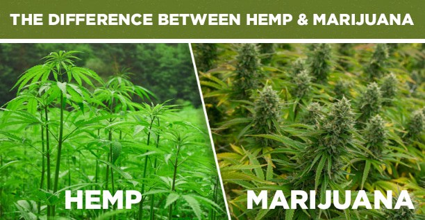 hemp myths