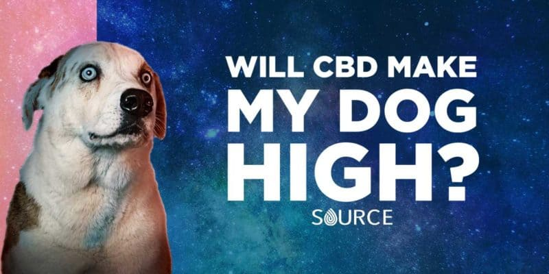 will cbd make your dog high